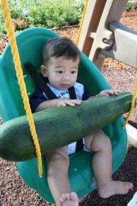 Huge-ass zucchini