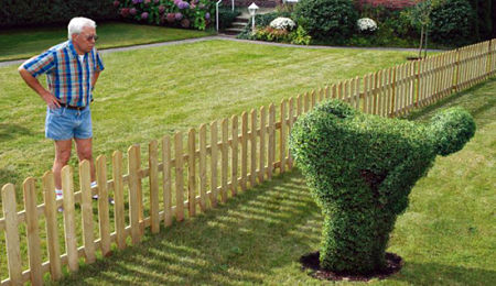 man-staring-at-neighbors-funny-hedges_opt
