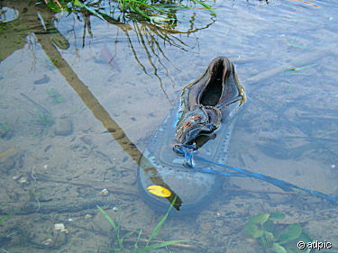 Stupid gummy shoe in a pond.